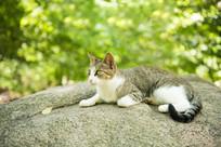山林中休息的猫咪