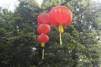 树木 红灯笼