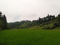 山坡下的田野