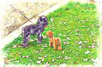 两只泰迪狗装饰画