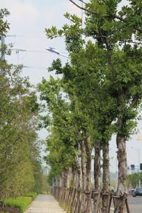 人行道旁树木