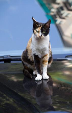 一只警惕的猫