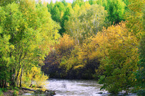 彩色树林和小溪