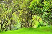 公园草地藤树风景