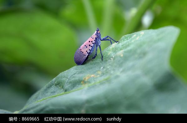 绿色叶子上的昆虫图片