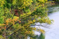 秋季河流树林色彩缤纷