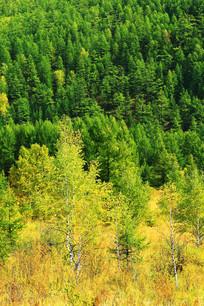 秋季山林风景