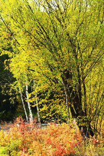 秋季树木彩色树叶