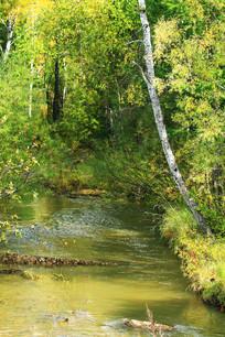 小溪树林风景