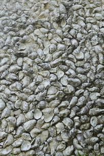 蚌的外壳做成的墙壁