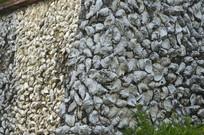 蚌壳墙壁近照