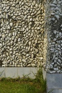 蚌壳墙壁摄影
