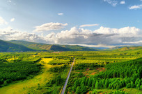 穿越绿色林海的山路 (航拍)