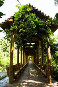 绿色花架长廊