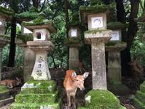 奈良春日社神鹿神社