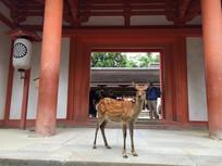奈良春日社神社神鹿
