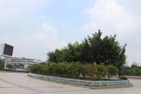 陈毅广场园林风景
