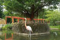 高傲的仙鹤雕塑