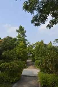公园里的风景