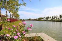 湖中太阳花