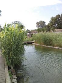 老北京三里河的园林一角