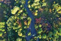 森林河五彩林 (航拍)