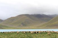 西藏美丽的羊卓雍措