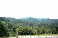 远望竹林里的村寨