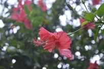 红色花卉素材