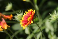 环境美化花卉