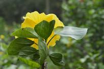 花色花卉素材