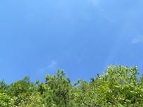 蓝天下的绿色森林