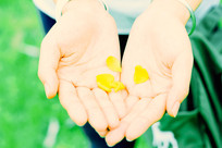 捧着花瓣的手