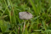 一朵小蘑菇