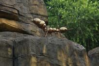 假山上的蚂蚁