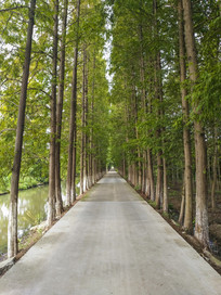 茂盛树林乡间路