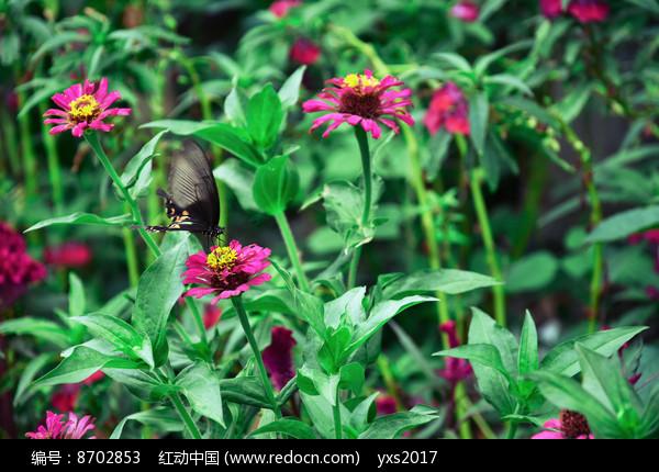 花丛中的蝴蝶图片