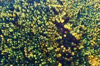 秋季林海 (航拍)
