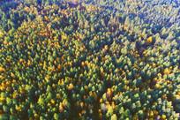 秋季森林风景(航拍)