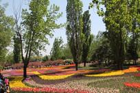 郁金香的花海花丛