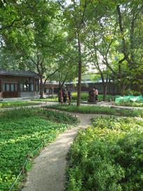 公园的园林一角