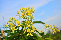 蓝天白云黄色小花