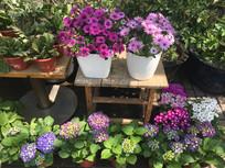 盛开的庭院小盆栽