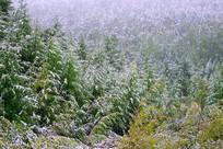 初秋森林雪景