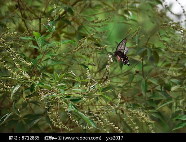 风中的蝴蝶图片