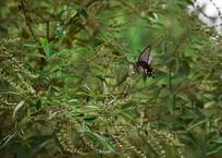 风中的蝴蝶