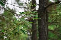 树林中的蝴蝶
