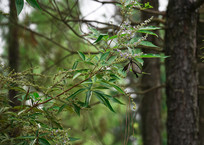 小树林中灰蝴蝶