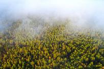 云雾迷漫的秋季林海