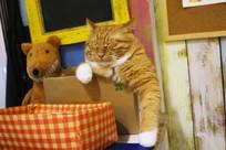 爱睡的橘猫